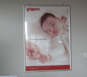 Display Promosional Click Frame Pigeon